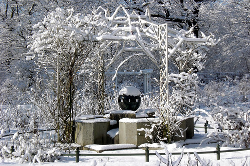 Rose Garden in Winter