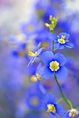 Blue (myu-myu) Tags: blue flower macro spring nikon sensational  bej d700 theunforgettablepictures tup2