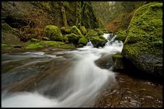 LOWER MCCORD CREEK SERIES (Cliff Zener) Tags: mt hood creeks zener oregoncreeksandrivers columbiagorgecreeksandrivers riverscliff