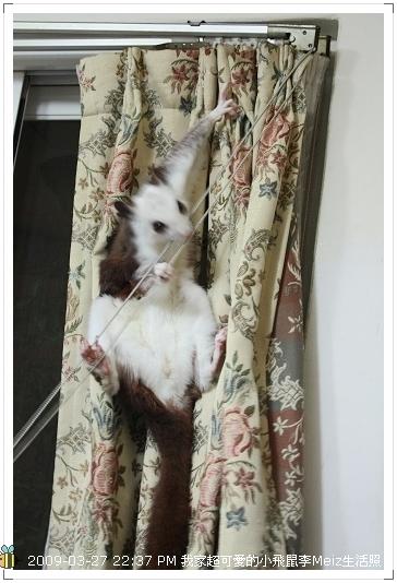 09年二三月小飛鼠Meiz生活照 (23)