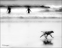 Dog's walk (Thierry Laurent :-)) Tags: reflexions soe supershot platinumphoto theunforgettablepictures rubyphotographer goldenheartaward artofimages bestcaptureaoi