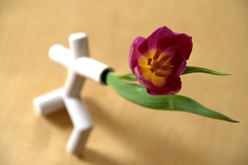 Roméo & la tulipe
