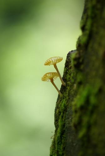 5 mushroom moods