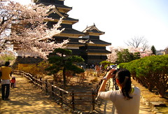 Sakura (Sanctu) Tags: park camera castle japan garden season photography spring photographer weekend saturday palace nagoya  cherryblossom sakura matsumoto nagano   matsumotojo matsumotoj