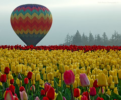Waiting For Lift Off (Nick Boren Photography) Tags: our hot balloons for yes air an have pacificnorthwest even to they bonus sure added soe suprise woodenshoetulipfestival elitephotography inspiredbyyourbeauty struckbyrainbow