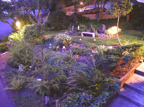 Yard at Night