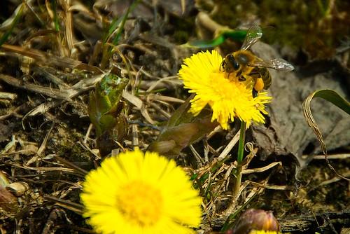 Весенние пчёлы