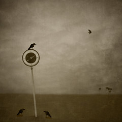 As the crow flies (borealnz) Tags: trees sky bird sign square flying surreal signpost crows nikaupalms compass navigate manray bsquare asusual uploadedtostopmewastinganotherday havingsecondthoughtsaboutthis borealnz