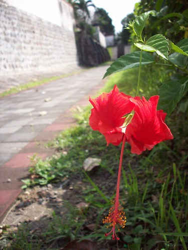 red flowers at narmada park