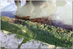 IMG_0787italy03.jpg (Spencer Hsieh & Voicechien) Tags: venice lagoon gondola venezia renaissance palazzoducale piazzasanmarco doge veneto  canalgrande vaporetti        basilicadisanmarcoavenezia  camposanpolo      veniceanditslagoon    serenissimarepubblicadivenezia