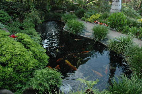 Necessary Koi Pond Supplies