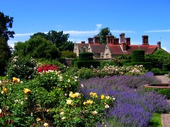 Roses and Lavender at Borde Hill Gardens, West Sussex