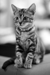 (  ) Tags: cat nikon dslr fx     d700