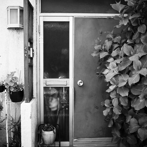 Door, Vines, Harajuku