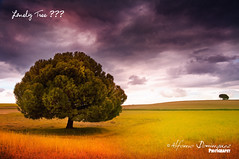 Lonely Tree ??? (Alfonso Domnguez Lavn) Tags: blue light red en brown tree verde green luz colors azul composition landscape geotagged arbol photography la rojo nikon all colours colorfull paisaje colores explore rights lonely fotografia pino marron frontpage reserved solitario composicion copyrighted d90 explored nikond90 geoposicionado wwwalfonsodominguezes alfonsodominguez fdv2010 ettyimagesspainq1