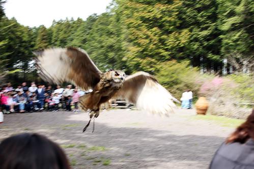 owl show