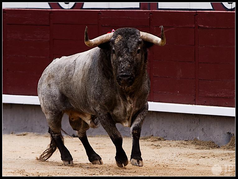 toro-de-Jose-Escolar-9