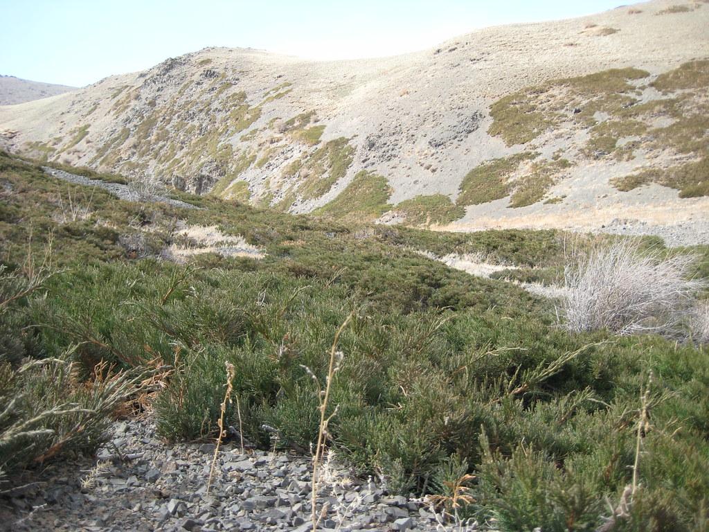 Заросли можжевельника в Йолын-Ам встречаются повсеместно