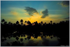Peek-A-Boo (Prof EuLOGist) Tags: trip trees sunset india reflection pond coconut express cochin ernakulam trivandrum enroute jinan hussain janashadapthi