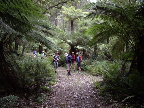 Bushwalk at Kinglake