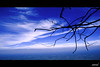 A branch in the sky (saternal) Tags: blue sky branch palakkad nelliyampathy mywinners aplusphoto nelliyambathi saternal