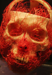 Bodies skull arteries