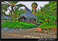 Hale' -  Hawaiian Thatched Roof Bungalows (j glenn montano 3) Tags: roof island hawaii coast big village glenn resort kona hale montano thatched kohala bungalows justiniano colourartaward