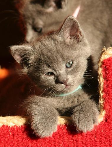 Kittens of Pegusha - Page 2 3245064470_c4cf21a9b6