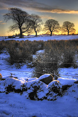 Trindlegreen Road Dunlop (BoboftheGlen) Tags: road uk snow tree scotland dunlop ayrshire