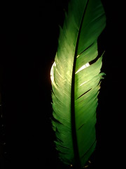 Green Feathers/White Light