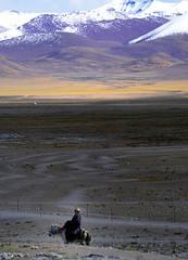 Horse View on Nyenchen Tanglha range (reurinkjan) Tags: horse nature tibet 2008 horserider changtang namtsochukmo tibetanlandscape tengrinor janreurink damshungcounty damgzung tashidorgompa བོད། བོད་ལྗོངས། བོད་པ། བོད་རིགས། རྟ། སྐྱ་མི། སྐྱ་མྱི། བཀྲ་ཤིས་བདེ་ལེགས། བྱང་ཐང།