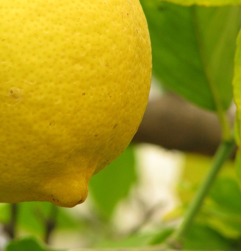 Grandpa's Lemon