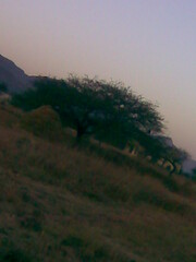 Spread. (Shah'91) Tags: india mountains tree green grass leaves spread shelter pune hugetree sadhnavillage