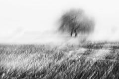 hug 3 (nicola tramarin) Tags: bw italy blur fog alberi hug italia nebbia inverno icm mosso blackwhitephotos intentionalcameramovement nicolatramarin