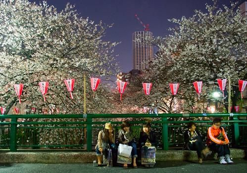 Sakura in Naka Meguro 15