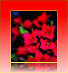 So much passion ... red! (* landscape photographer *) Tags: italy primavera europe natura basilicata nights fiori rosso vita 1001 passione profumi chiaromonte goldstaraward salvyitaly lucaniabella