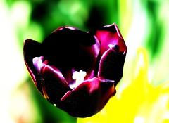 Deep Purple (mightyquinninwky) Tags: flowers flower campus geotagged purple landscaping explore picnik purpleflowers usi ohiorivervalley explored evansvilleindiana usicampus geo:lat=37964329 geo:lon=87676854 exploreformyspacestation