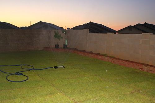 backyard 015