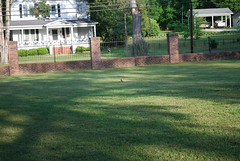 Front Yard (Harmony Jewelry Design) Tags: flowers plants house art pool golf charm historic chester historical british bb bedbreakfast frontporch luxury smalltown pampered chestercounty slowpace relaxandunwind ensuiterooms nearcharlottenc