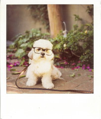 I saw a square cloud today. (fivefortyfive) Tags: dog polaroid glasses 3d haha fivefortyfive maggieannre