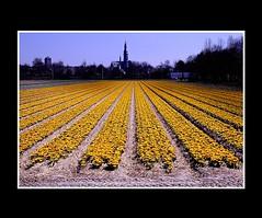 Landscape (Theo Kelderman) Tags: netherlands landscape nederland kerk landschap lisse bollenveld bollenstreek theokeldermanphotography
