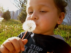 Making wishes (Eyes Of 16) Tags: boy fun outdoors small 3yearold