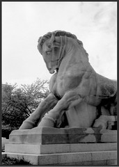 Equs (photo_secessionist) Tags: bw sculpture horse film analog zeiss 1936 35mm washingtondc blackwhite nw jena contax zeissikon efke federaltriangle nationalhistoriclandmark federaltradecommission kb100 uncoated contaxii mancontrollingtrade f155cmsonnarlens