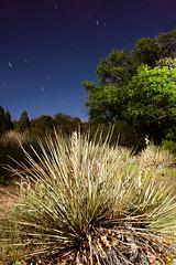 Night Shoot -Garden of the Gods (Efrain Cruz) Tags: nightphotography trees stars flash gardenofthegods nightshoot coloradosprings bushes groupouting illuminateworkshops freeouting 2009efraincruz 20090606