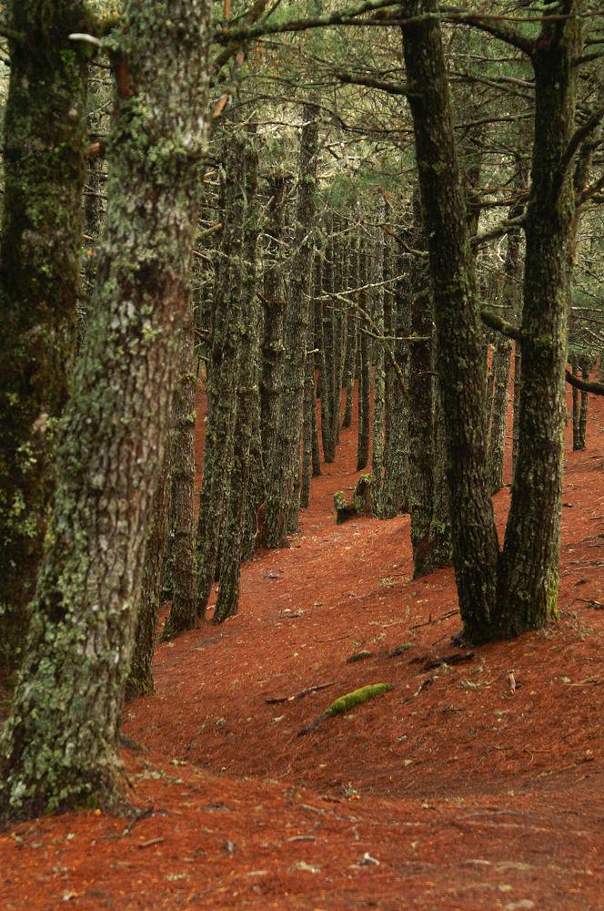 南湖大山day5-34 松針紅地毯