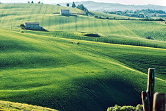 Green Sea (.Gianluca) Tags: italy colors rural landscape hill land marche jesi collina ancona