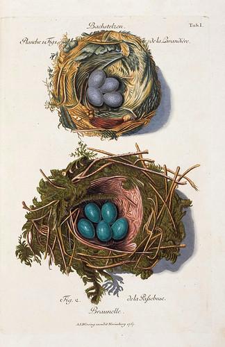 001-Nidos del Aguzanieves y la Curruca del Seto-Colección de nidos de aves 1772