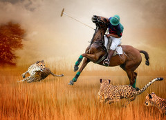 Polo with Cheetahs (Isabelle Ann) Tags: horses art photographer isabelle cavallo cavalo polo pferd equine warrenvt cabello equus paard artisticphotography mostbeautiful waitsfieldvt equineart barkeater sugarbushpoloclub isabelleann poloteam isabelleanngreen polophotography impressedbeauty sporthorse equestrianart poloart equinephotographer artistichorse isabellegreen harlowcarpentermemorialpolo isabellegreenphotography isabelleannphotography isabelleannhorses equineartist artisticpolo