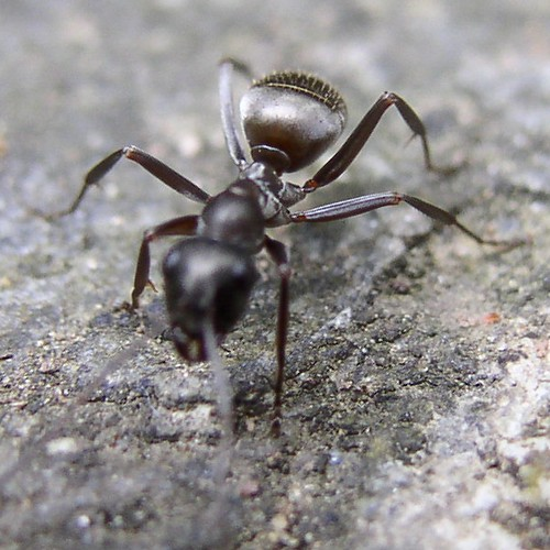 Natural Way To Get Rid Of Ants In My Kitchen