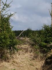 harz_50 (Torben*) Tags: trees lumix panasonic bume harz fz50 lichtung rawtherapee